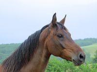 Het paard: een bijzonder zorgdier